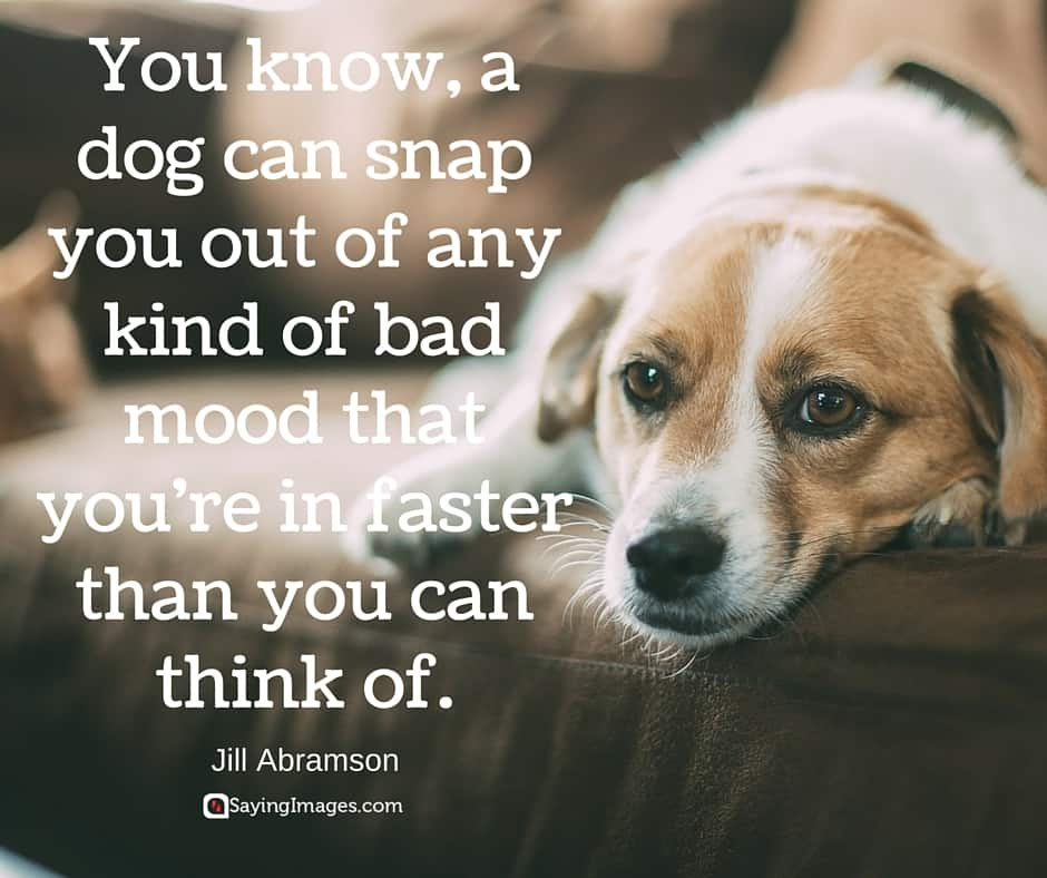 29 Inspirational Dog Quotes About Life And Love Playbarkrun