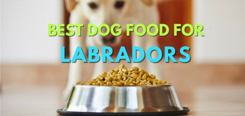 Best-Dog-Food-Labs