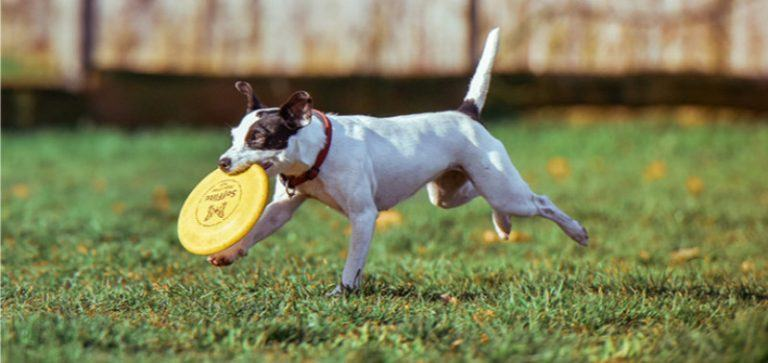 best-dog-frisbee