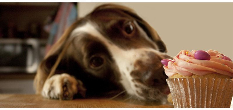 Incredible 14 Dog Birthday Cake Cupcake Homemade Recipes Playbarkrun Funny Birthday Cards Online Sheoxdamsfinfo