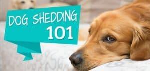 dogshedding101