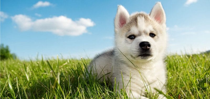 400 Cute Unique Funny Husky Names