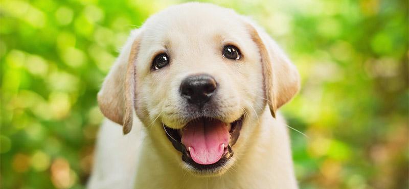 Image of: Puppies Funnydognames Playbarkrun 200 Funny And Silly Dog Names Playbarkrun
