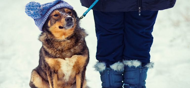 dog-winter-coat