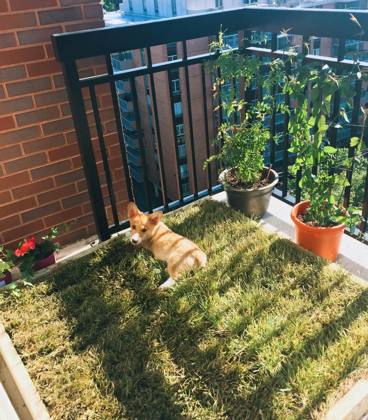 15 Diy Dog Porch Potty Grass Box, Indoor Dog Bathroom Solutions