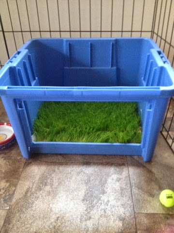 tiny grass potty