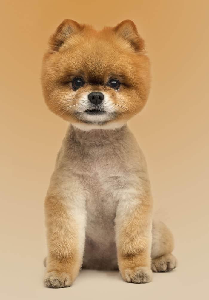 teddy bear cut
